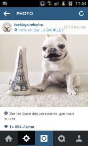 On aime les bouledogues français sur Instagram